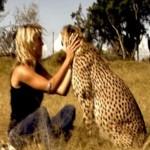 Orphaned Cheetah – Athena